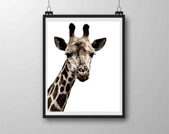 "High Contrast Giraffe Photo Art, Giraffe Portrait, 8"" x 10"", Instant Download, Wall Decor, Wall Art, Kid Room, Wildlife Photo,"