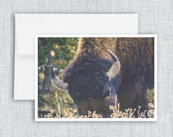 Afternoon Grazing - greeting card, blank greeting card, american bison, buffalo, yellowstone national park, travel, adventure, photography