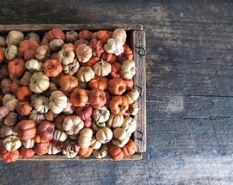 5 Cups – Natural and Orange Mix Putka Pods