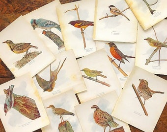 Birds of a Feather... Collection of Antique 1907 Bird Prints Pictures Paper Ephemera Feathered Friends Artwork Gallery Wall