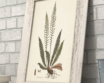 Fern Osmunda - 11x14 Unframed Art Print - Great Gift for Nature Lovers