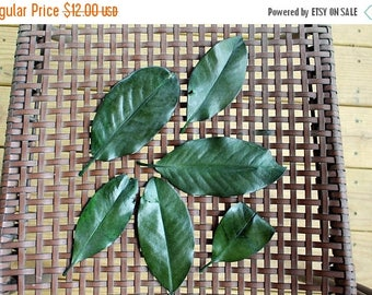 Save25% Magnolia leaves-IMPERFECT 100 leaves preserved green - Gift wrapping-Party Favors-Wedding invitations