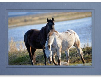 Wild Horse Cards - Wading Through the Refuge - Cards Horses - Equine Cards