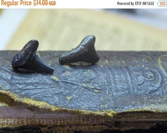 SALE The Deep No. 7. Genuine Shark teeth and titanium post earrings