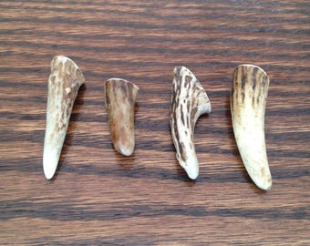 Deer Antler Tips-Small