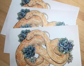 Cornsnake - 5 x 7 Print Matte Finish