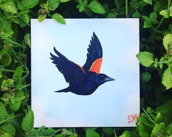 Red-Winged Blackbird, 6 x 6, Original Artwork