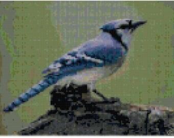 A Blue Jay Cross Stitch Pattern