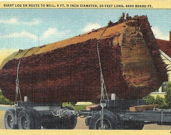 Oregon, Giant Log, Lumber Mill - Vintage Postcard - Postcard - Unused (P)