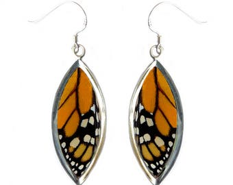Real Butterfly Wing Sterling Silver Earrings - MonarchTop Wing Sterling Silver