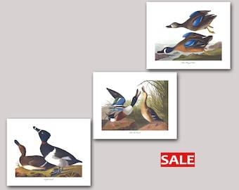 Duck Art Prints, Set of 3 - Tufted Duck Art, Shoveller Duck Art, Blue Winged Teal Duck Art (Audubon Dabbling Duck Prints, Bird Decor) SALE
