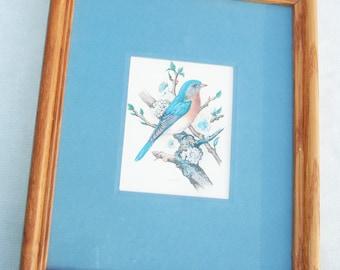 Vintage Framed Blue Bird Print  - Vintage Home Decor