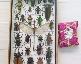 3D Real Rare Big Set Stick Bug Bugs Insect Insects Framed Box Display Taxidermy Spider Gideon Jewel Dung Beetle Cicada Scorpion Entomology