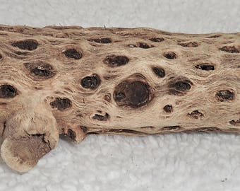 """Hard to find - Cholla Wood ~ 2"""" x6"""" ~ Display Air Plants, Succulents, Cactus, Orchids  K"""