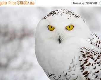 ON SALE Snowy Owl Fine Art Bird Photography, Home Decor Art Print, Bird Wall Art, Nature Print, Bird Lover Art, Owl Decor, White Owl in Wint