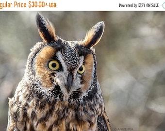 ON SALE Owl Photography Print, Long Eared Owl, Bird Home Decor Art Print, Large Wall Art, Rustic Nature Print, Bird Lover Art, Owl Decor