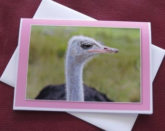 Ostrich / Ostrich Card / Birthday Card / Anniversary Card / Just Because Card / Get Well Card / MVMayoPhotography / Free US Shipping