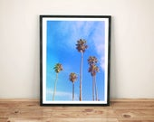 palm tree photography / C...