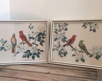 Vintage Bird Prints / Vintage Floral Prints