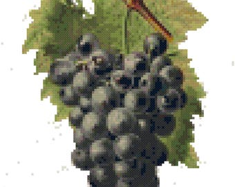 Vintage Grapes Drawing Cross Stitch Pattern, Digital Download PDF