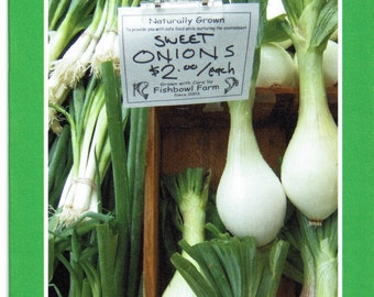 Sweet onions at the Farmer's Market - photo card