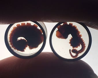 REAL Mummified Octopus Tentacles Specimen PAIR Resin Taxidermy Double Flare Steel Tunnel Gauge Plugs 14mm