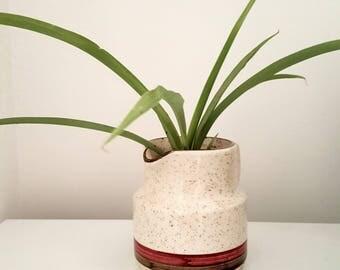 Hawaiian Spider Plant in Vinatge pot
