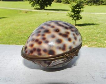 Cowry Shell Trinket Box/Pill Box