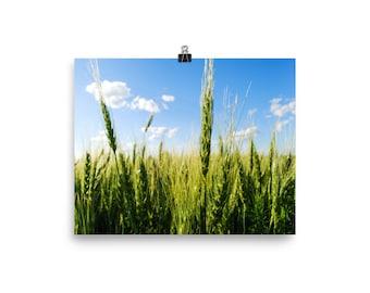 Photo paper poster - Red Silo Original Art - Green Wheat