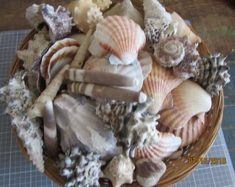 8+ POUNDS of shells, Tank shells, Nautical, Real shells, Beach wedding Coral,  Coral, Coral