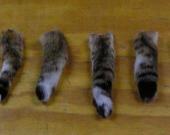 6 Bobcat Tails