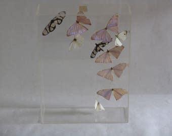 Vintage butterfly plastic case display art piece