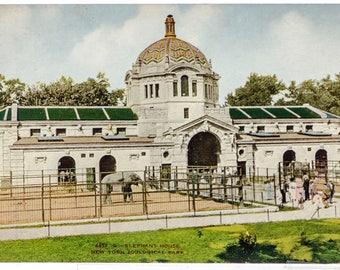Elephant house New York Zoological Park 1906 unused postcard
