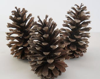 Trio of Large Pinecones • As Found Natural Dried Pinecones