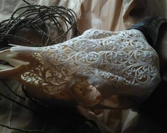 real cow skull carving with sebun kedis design