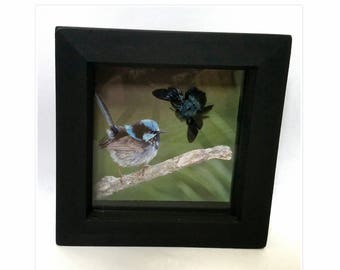 Framed real blue carpenter bee display specimen with bird nature Taxidermy Oddities UK