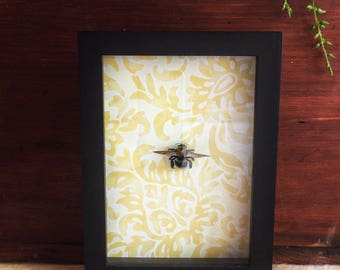 Bee Insect Display // Carpenter Bee// Bumblebee // Insect Frame // Insect Taxidermy // Save the bees