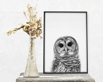 Owl Print, Animal Wall Art, Nursery Decor, Nursery Printable, Nursery Animals, Nursery Animal Print,  Printable Art, Wall Art, Animal Print