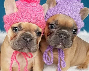 Small Puppy Dog Holiday Knit Crochet Hats, beanie toque pompom beanie Xmas Colors French Bulldog Puppy Hats Fashion Accessories
