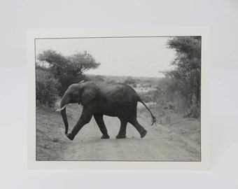 10 Elephant Cards//Blank Cards//Blank Elephant Cards//Elephant Walking Cards//10 Cards//Photography