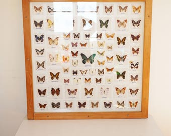 Huge 73 collection frame butterflies 110cm X 110 cm