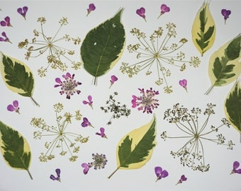 "MIXED PRESSED FLOWERS | mixed pressed flowers | green purple yellow pressed flowers and leaves | 1,5 - 9 cm | 0.6"" - 3.5"" inches"
