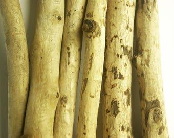 Assorted Beaver wood, Authentic Beaver sticks, Selected natural sticks, Drift wood like sticks, Driftwood Branches, Beaver Chewed sticks
