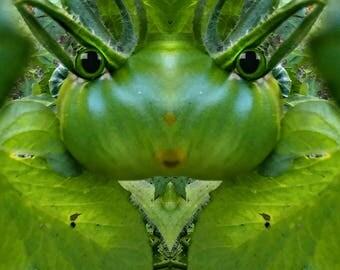 Green Tomato Fairy