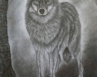 Grey wolf, original pencil drawing