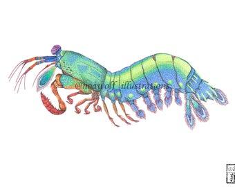 mantis shrimp print - mantis shrimp art - mantis shrimp design - shrimp art - shrimp print - shrimp drawing - shrimp painting - animal art