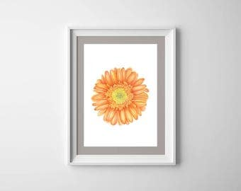 Gerbera Watercolor Art, Digital Print Download, Botanical Art, Flowers