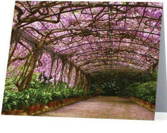 Beautiful, Artistic Stationery - Wysteria Vines in Spain