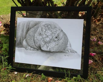 Graphite Tegu Framed Original