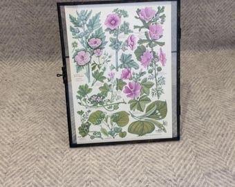 Genuine vintage framed botanical drawing, flower illustrations, botanical print, floral, in glass frame, Green leaves Purple